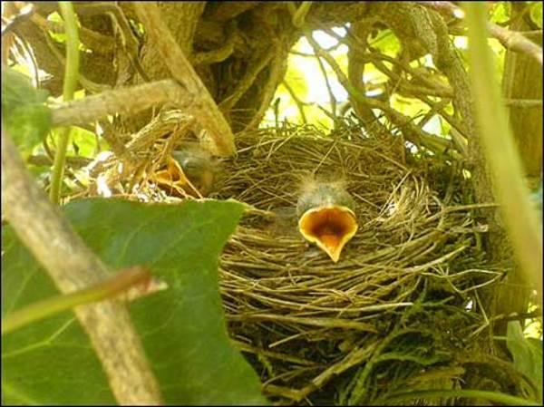 Baby_bird_470_470x352